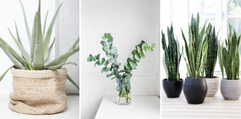 planten in je slaapkamer