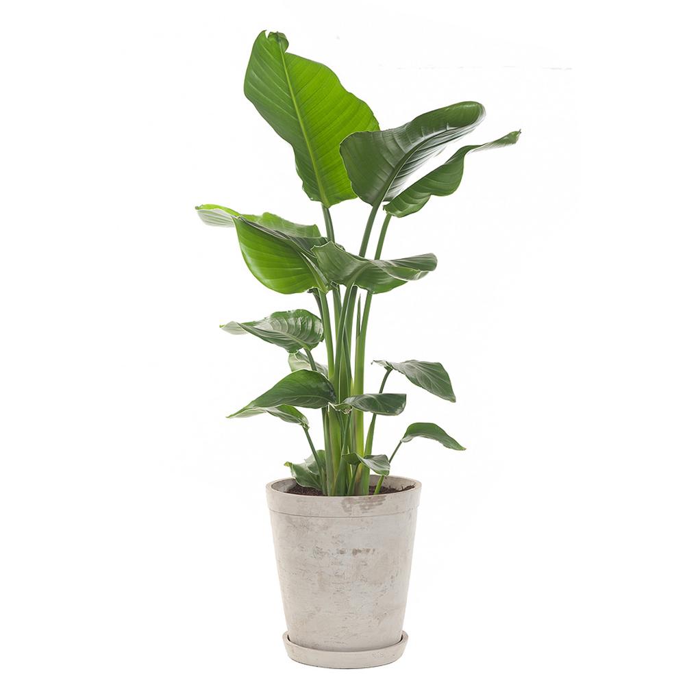 kamerplanten top 5